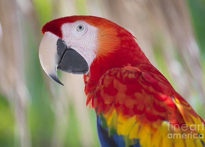 2013 Greeting Card featuring the photograph Parrot On Isla Tortuga-207 by Andria Patino
