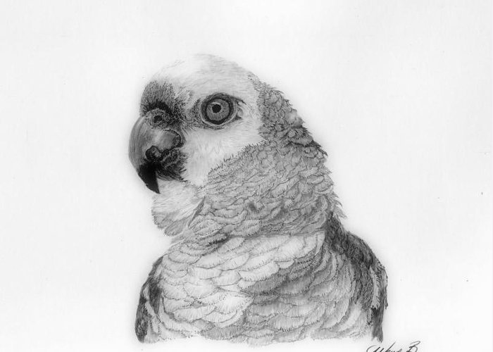 Parrot Greeting Card featuring the drawing Parrot by Wendy Brunell