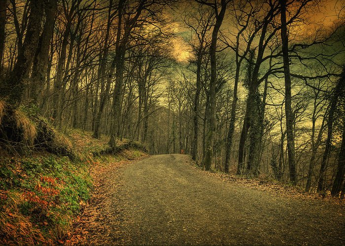 Woods Greeting Card featuring the photograph Path IIi by Taylan Apukovska