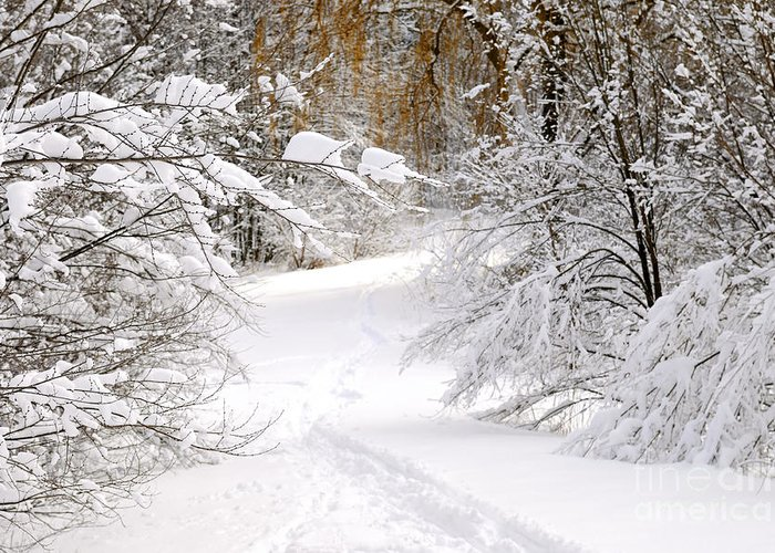 Winter Greeting Card featuring the photograph Path In Winter Forest by Elena Elisseeva