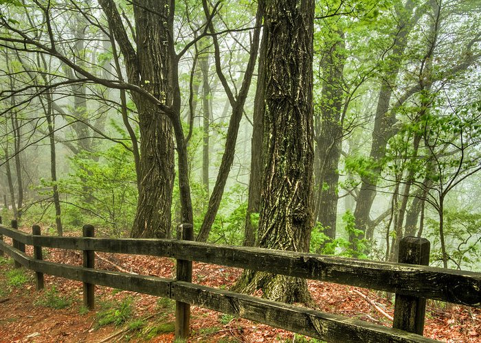 Appalachia Greeting Card featuring the photograph Path Into The Forest by Debra and Dave Vanderlaan