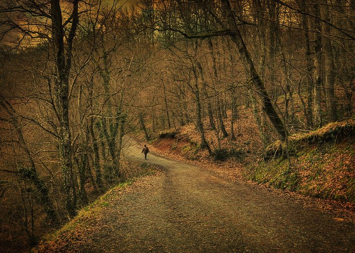 Woods Greeting Card featuring the photograph Path by Taylan Apukovska