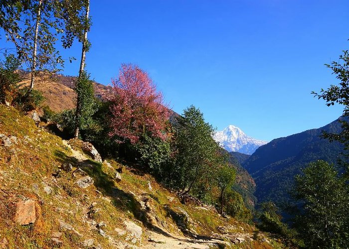 Annapurna Greeting Card featuring the photograph Path To The Mountains by FireFlux Studios