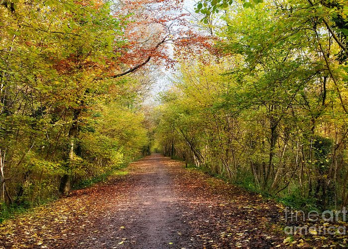 Leaf Greeting Card featuring the photograph Pathway Through Sunlit Autumn Woodland Trees by Natalie Kinnear