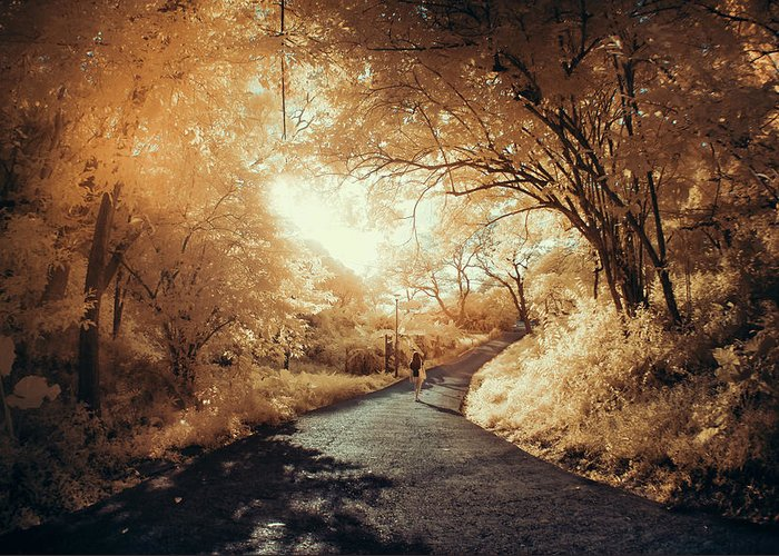 Shadow Greeting Card featuring the photograph Pathway To Wonderland by D3sign
