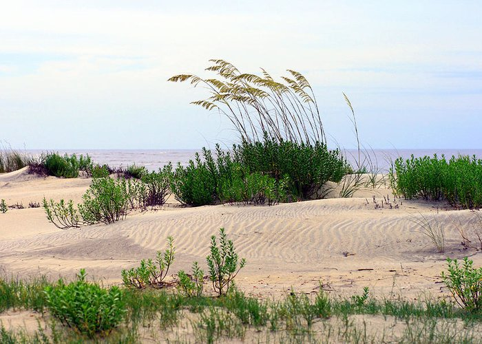 Beach Greeting Card featuring the photograph Patterned Dune With Oats by Barbara Northrup