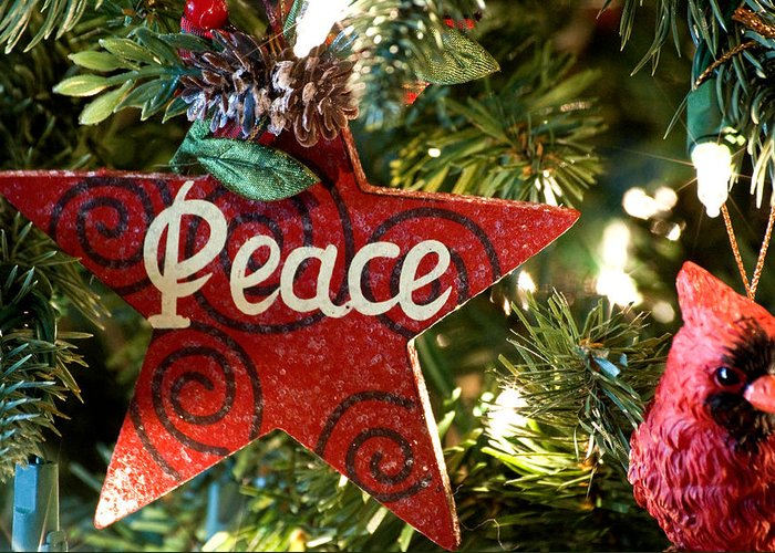 Christmas Greeting Card featuring the photograph Peace by Don Durante Jr