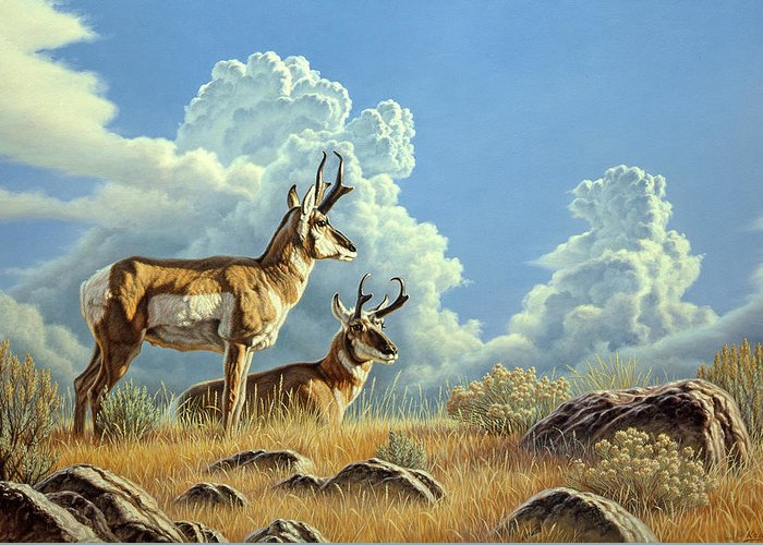 Pronghorn Greeting Cards