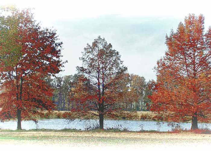 Pond Greeting Card featuring the photograph Peaceful Pond by Bonnie Willis