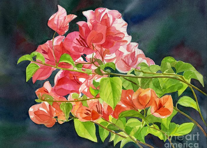 Bougainvillea Greeting Card featuring the painting Peach Colored Bougainvillea With Dark Background by Sharon Freeman