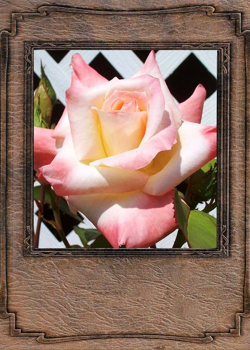 Peach Rose Greeting Card featuring the photograph Peach Rose by Mark Szep