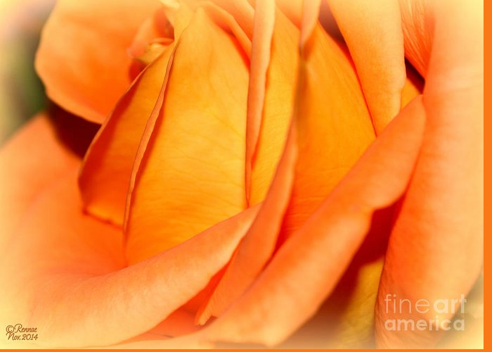 Flower Greeting Card featuring the photograph Peach Rose by Rennae Christman