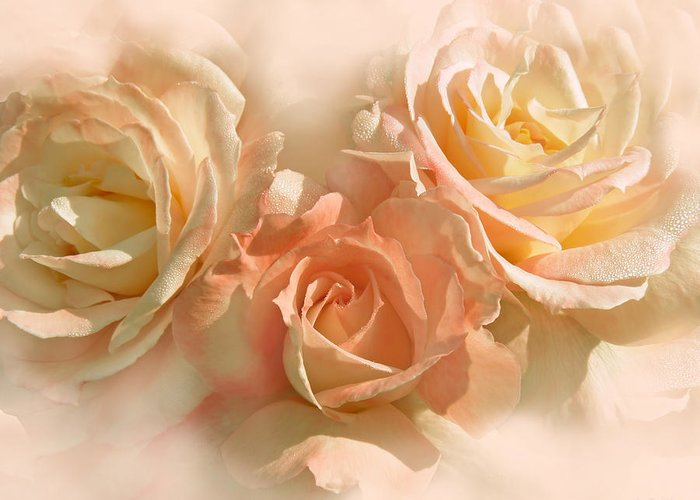 Rose Greeting Card featuring the photograph Peach Roses In The Mist by Jennie Marie Schell