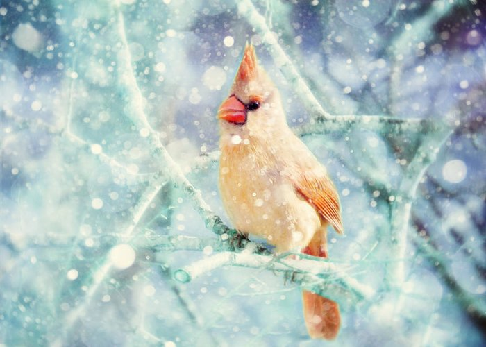 Female Cardinal Greeting Card featuring the photograph Peaches In The Snow by Amy Tyler