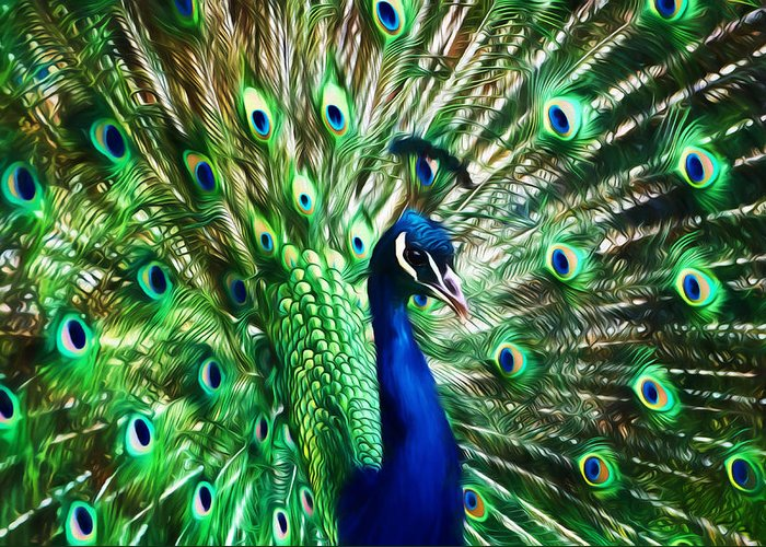 Peacock Greeting Card featuring the photograph Peacock - Impressions by Susie Peek