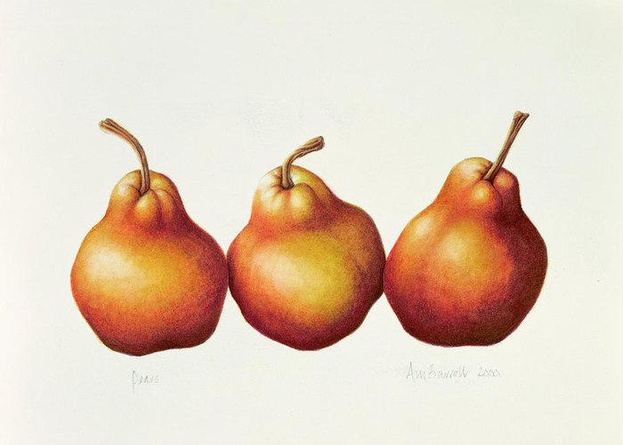 Botanical: Fruit Greeting Card featuring the painting Pears by Annabel Barrett
