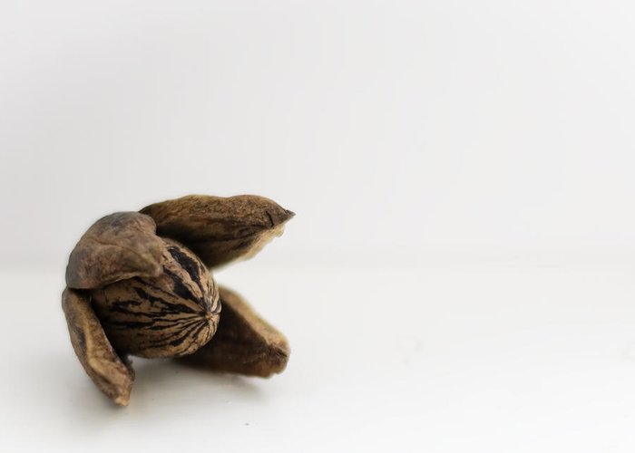 Pecan Greeting Card featuring the photograph Pecan by Heather Applegate