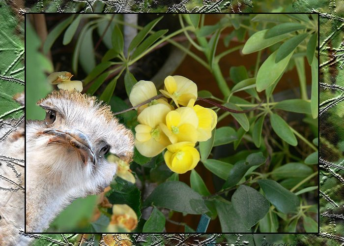 Begonias Greeting Card featuring the photograph Peek-a-boo by Ericamaxine Price