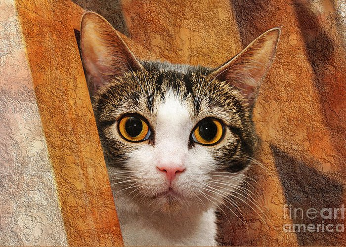 Andee Design Cat Eyes Greeting Cards