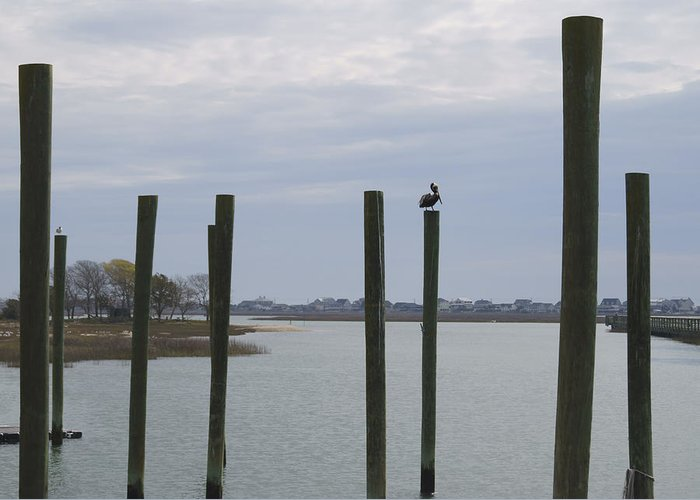 Pelican Greeting Card featuring the photograph Pelican And Pilings On The Inlet by MM Anderson