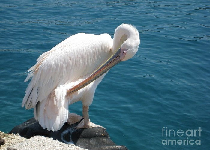 Myconos Greeting Card featuring the photograph Pelican At Mykonos by A K Dayton