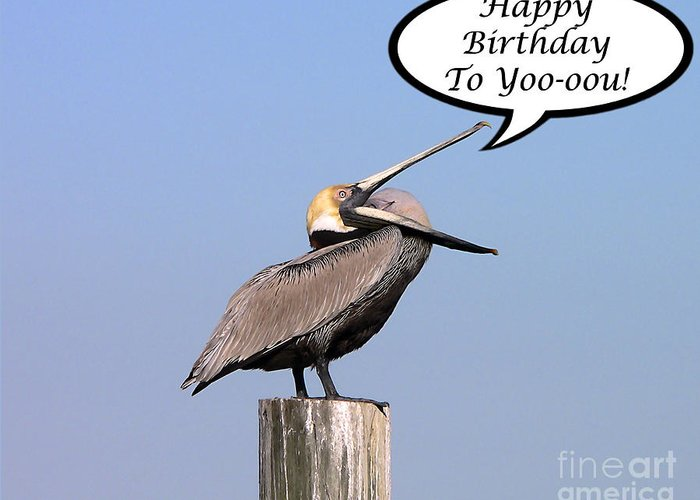 Birthday Greeting Card featuring the photograph Pelican Birthday Card by Al Powell Photography USA