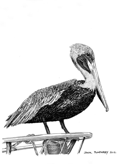 Monterey Bay Pelican Greeting Card featuring the drawing Pelican Of Monterey by Jack Pumphrey