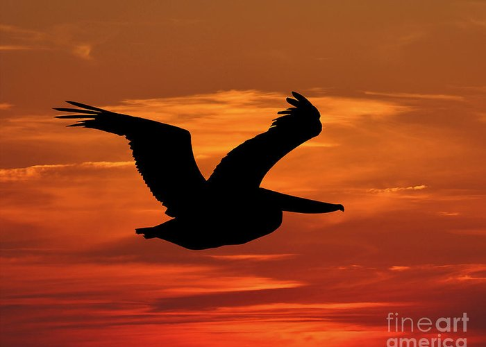 Pelican Silhouette Greeting Card featuring the photograph Pelican Profile by Al Powell Photography USA
