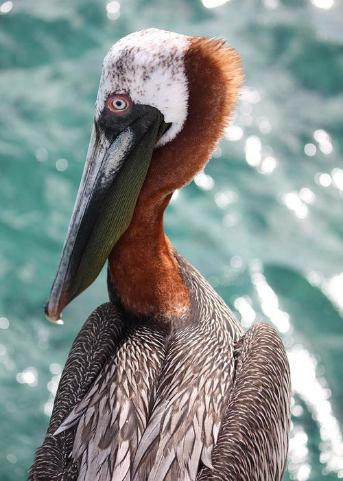 Pelican Greeting Card featuring the photograph Pelican Visit by Paula Thomas