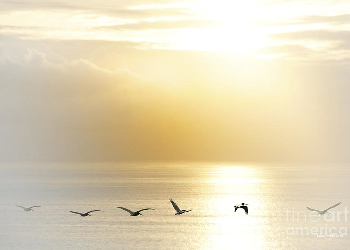 Pelican Art Greeting Card featuring the photograph Pelicans Over Malibu Beach California by Artist and Photographer Laura Wrede