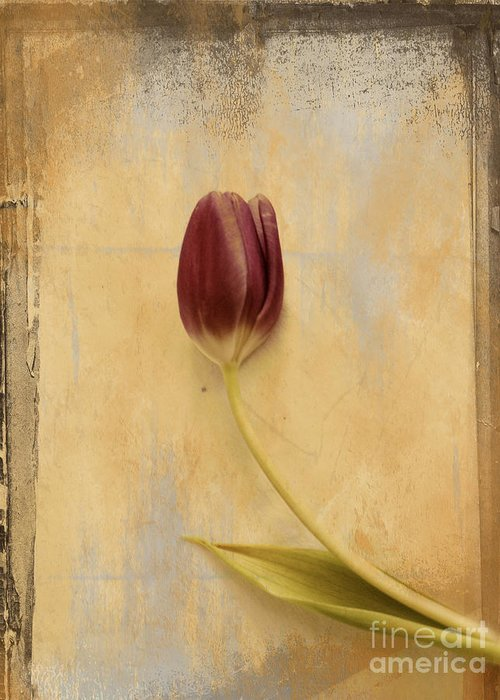 Tulip Greeting Card featuring the photograph Penchant Naturel 03bt03c by Variance Collections