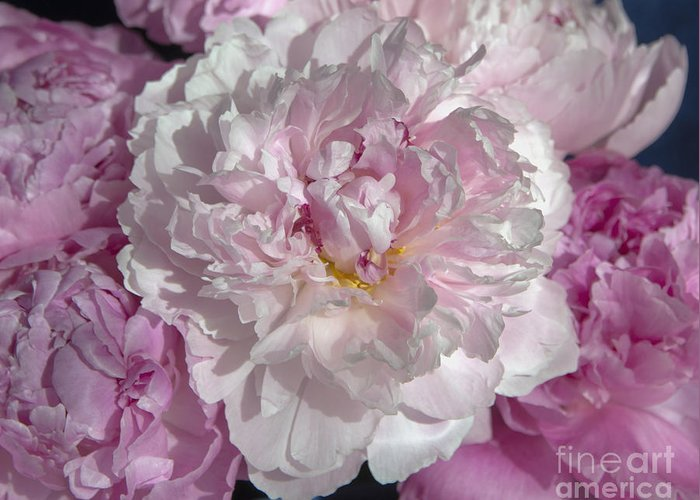 Spring Greeting Card featuring the photograph Peony 6857 by Terri Winkler