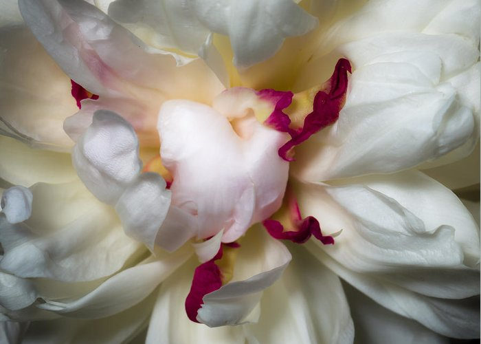 Closeup Greeting Card featuring the photograph Peony by Carl Engman