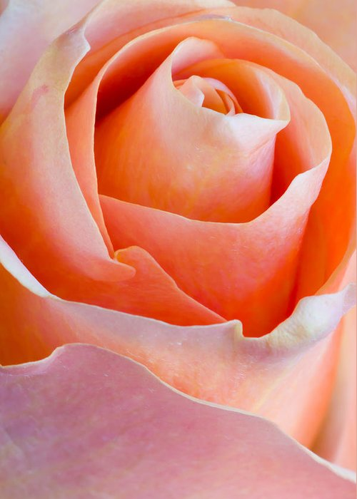 Macro Greeting Card featuring the photograph Perfection In A Peach Rose by Heidi Smith