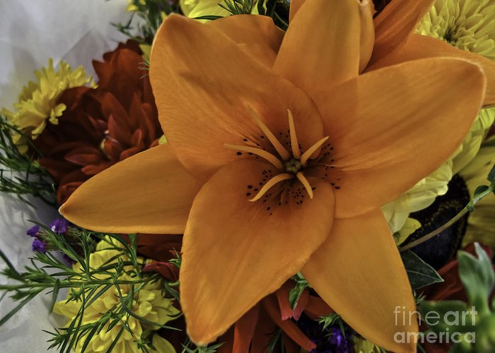 Flower Greeting Card featuring the photograph Perfectly Peachy by Arlene Carmel
