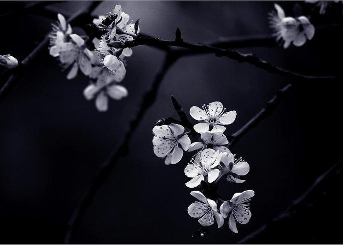 Designs Similar to Petite Fleur De Mes Nuits
