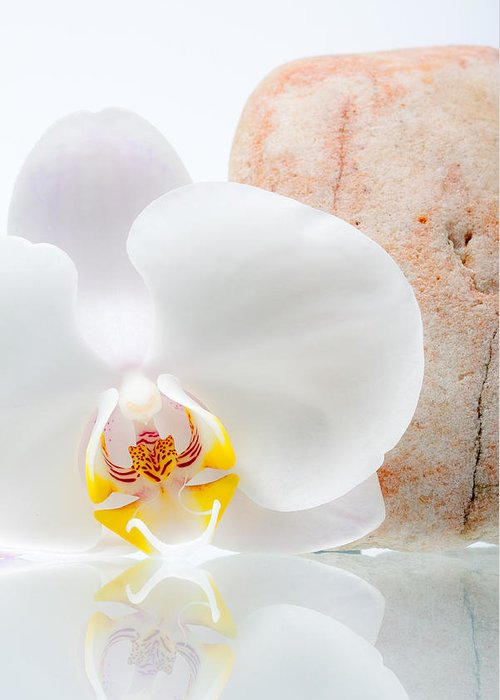 Phalenopsis Greeting Cards