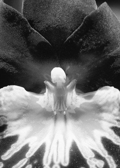 Orchid Greeting Card featuring the photograph Phantasma by Katherine Morgan
