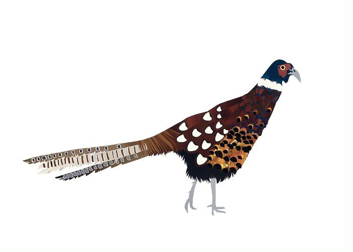 Pheasant Greeting Card featuring the painting Pheasant by Isobel Barber