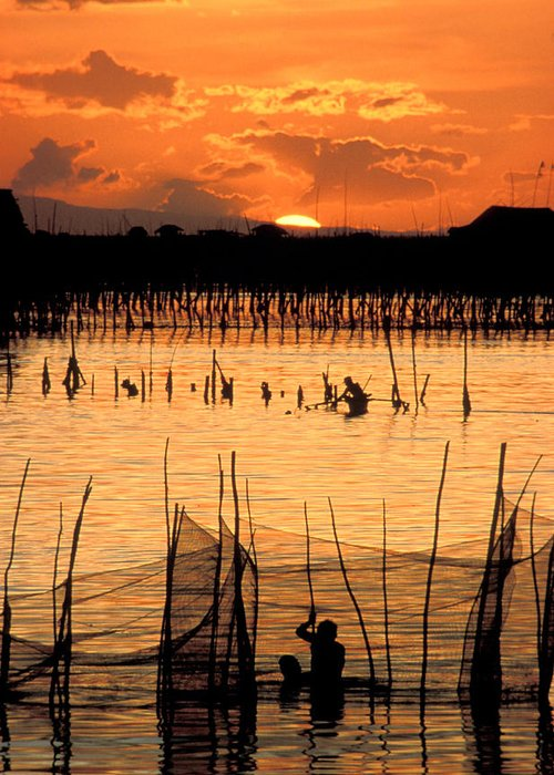 Vertical; Outdoors; Sunset; Incidental People; Silhouette; Non Urban Scene; Tranquility; Sea; Fishing; Manila; Philippines; Wading; Fishing Industry; Fishing Net Greeting Card featuring the photograph Philippines Manila Fishing by Anonymous