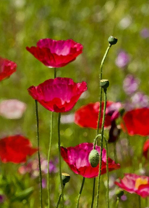 Poppies Greeting Card featuring the photograph Picture Perfect Too by Rich Franco