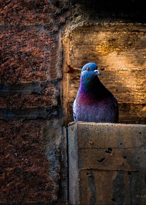 Pigeon Greeting Card featuring the photograph Pigeon Of The City by Bob Orsillo