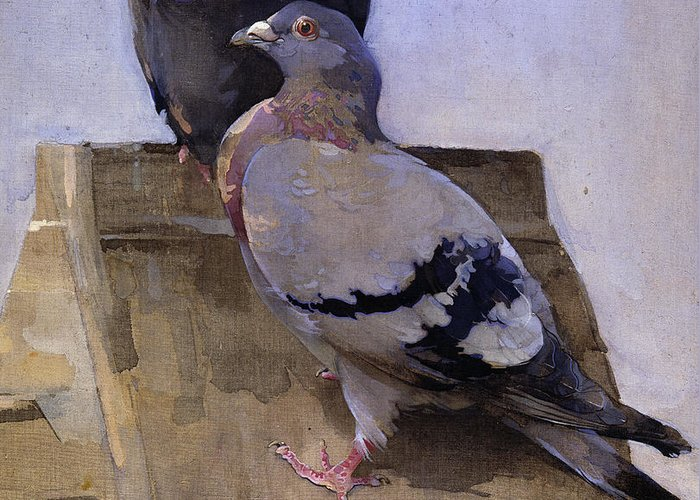 Pigeon Greeting Cards