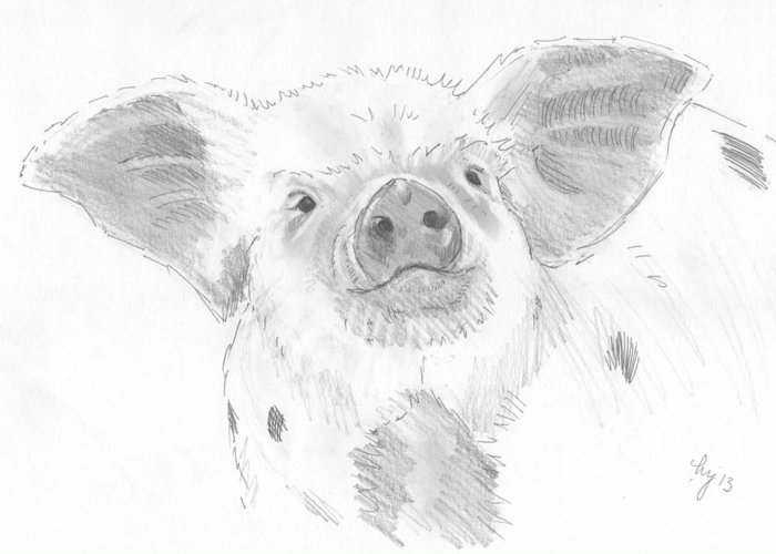Pig Greeting Card featuring the drawing Piglet  by Mike Jory