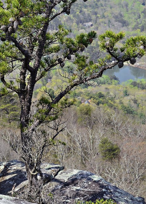 Nature Greeting Card featuring the photograph Pine Tree On A Mountain by Susan Leggett