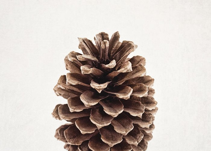 Pinecones Greeting Cards