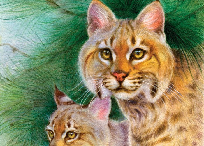 Bobcats Greeting Card featuring the painting Pinewoods Bobcat by Tracy Herrmann