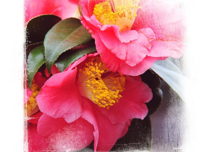 Camellia Greeting Card featuring the photograph Pink Camellia. Elegant Knickknacks by Jenny Rainbow