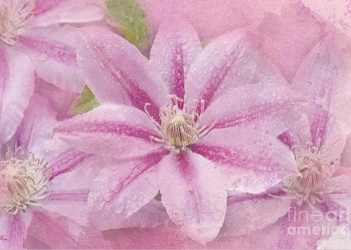 Clematis Greeting Card featuring the photograph Pink Clematis Profusion by Betty LaRue