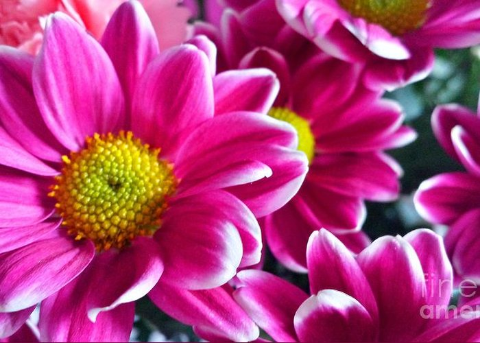 Pink Greeting Card featuring the photograph Pink Daisies by Lisa Byrne